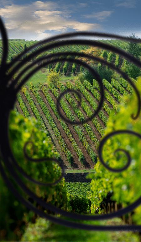 Propriété Château de vins de Bordeaux D.R. A de Luze