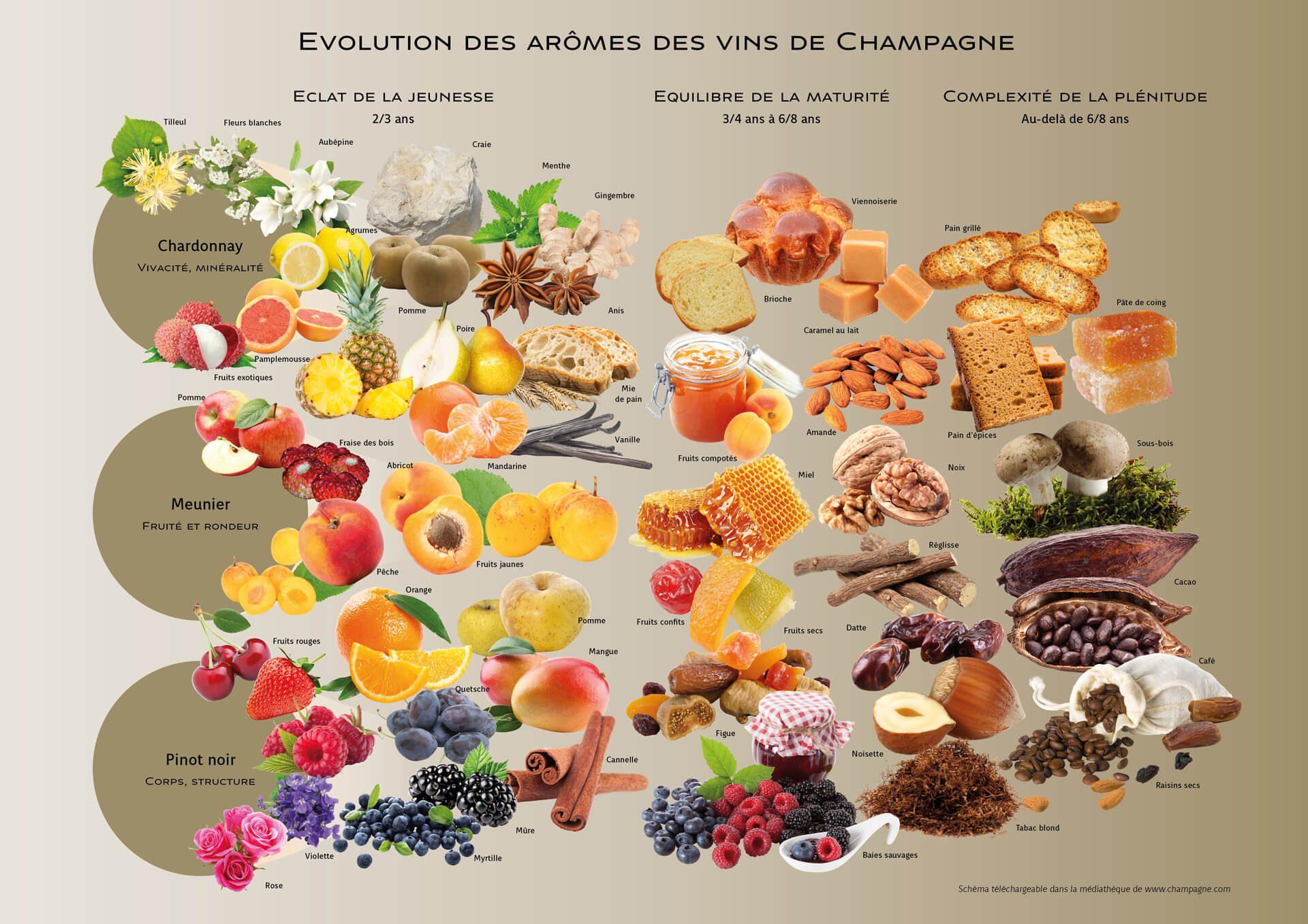 Carte des arômes de champagne CIVC